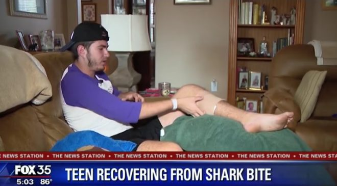 Shark bites reported in New South Wales and Florida
