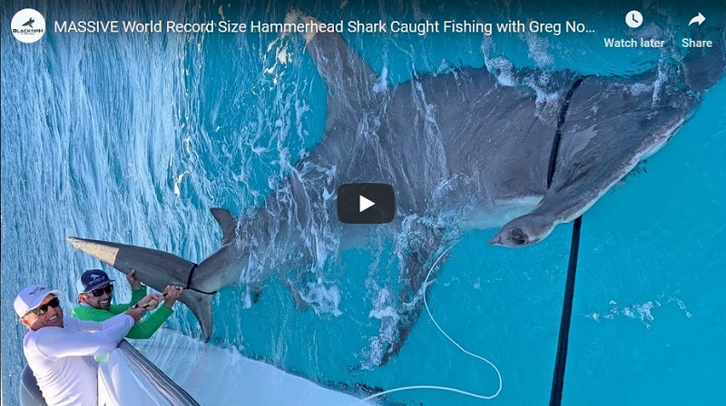 Greg Norman hooks shark that is eaten by record setting 14-foot hammerhead
