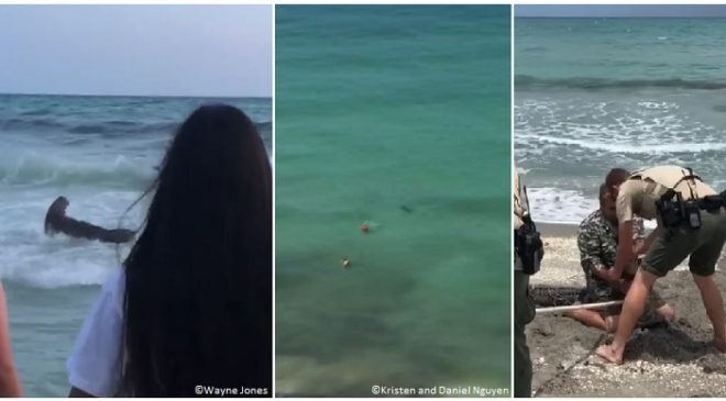 Florida: 2 sharks filmed off Panama City Beach; gator captured on Hobe Sound Beach