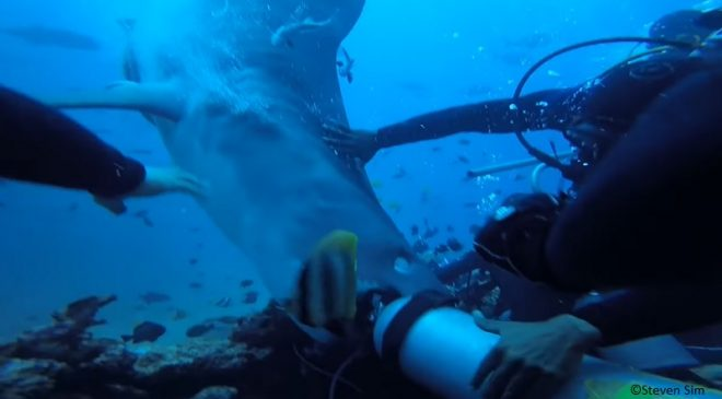 Video: Diver nearly loses head to tiger shark in Fiji