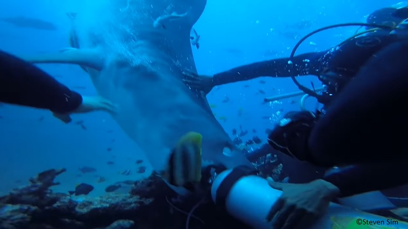 tiger shark nearly bites divers head
